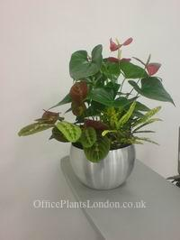 Desk top bowl with asorted plants